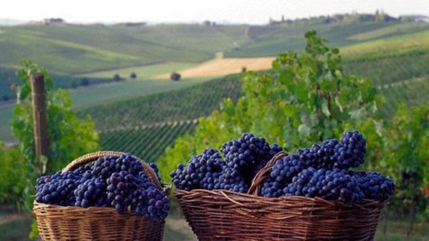 Prskanje i zaštita vinove loze