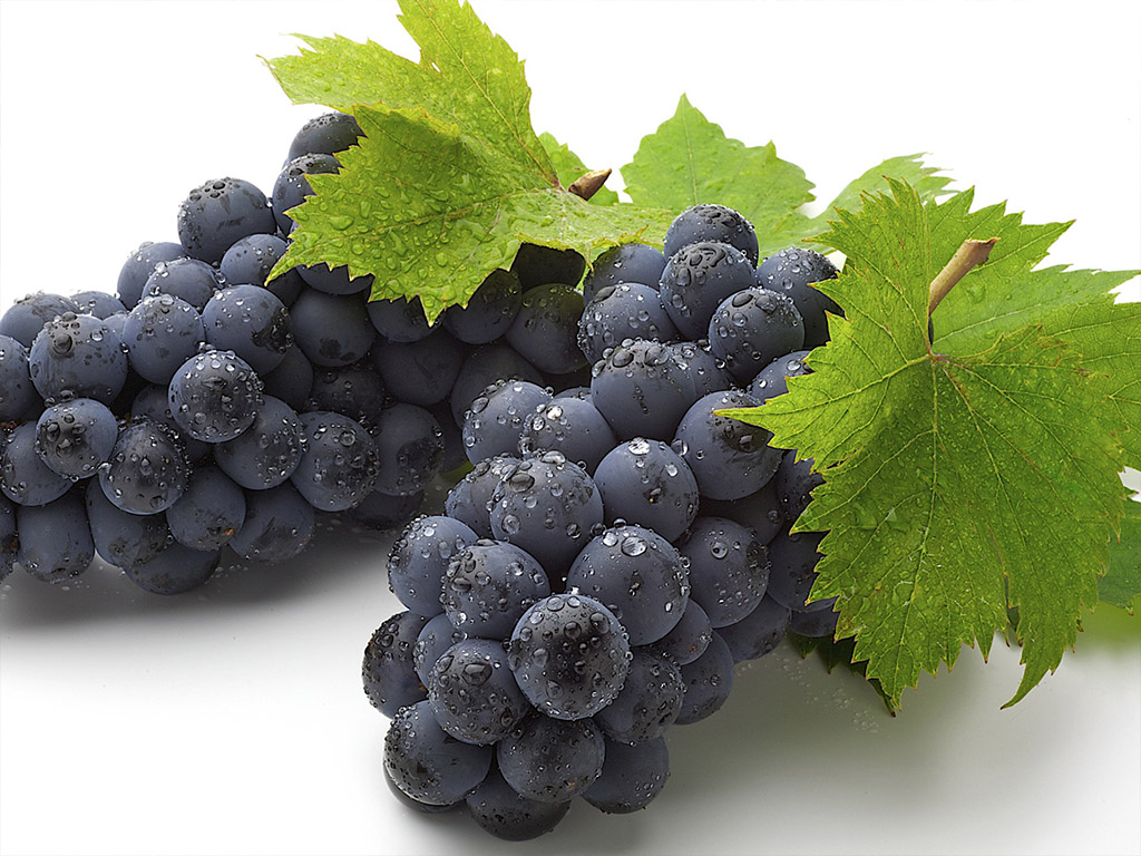 Sadnice vinove loze Vranac